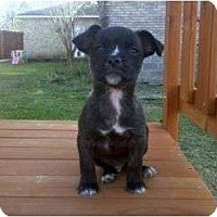 Adopt A Pet :: BROWNIE (DELICIOUS) - Hendersonville, TN