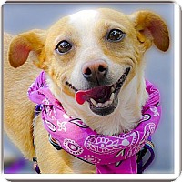 Adopt A Pet :: Sunshine adoption pending - Sacramento, CA