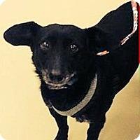 Adopt A Pet :: Bibo - Ogden, UT