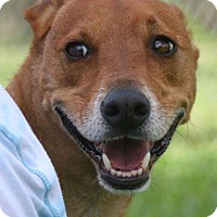 Basenji Mix Dog for adoption in Palmetto Bay, Florida - red