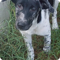 Adopt A Pet :: McGhee - Ball Ground, GA