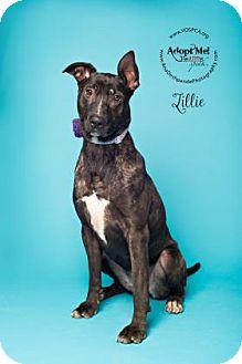 Bull Terrier Mix Dog for adoption in Visalia, California - Lillie