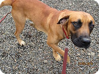 Shepherd (Unknown Type) Mix Dog for adoption in Tillamook, Oregon - Hunter