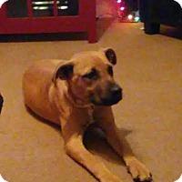 Adopt A Pet :: Cody - Manhasset, NY