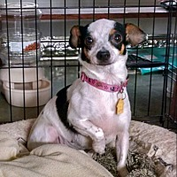 Adopt A Pet :: Betty - Cat Spring, TX