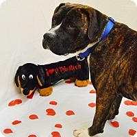 Adopt A Pet :: Lucas - Pulaski, TN