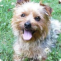 Adopt A Pet :: Dover - Mocksville, NC