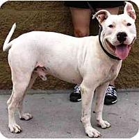 Adopt A Pet :: Boy - Gilbert, AZ