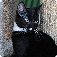 Adopt A Pet :: Mazy - Palmdale, CA