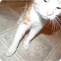 Adopt A Pet :: Thomas - Nashville, TN