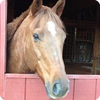 Adopt A Pet :: Riley - East Granby, CT