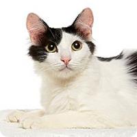Adopt A Pet :: Boomer - Santa Monica, CA