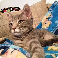 Adopt A Pet :: Cubby - Clearfield, UT