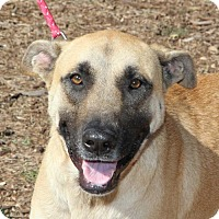 Adopt A Pet :: Dolly - Helotes, TX