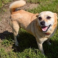 Adopt A Pet :: Freda - Little Elm, TX