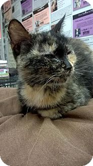 Domestic Shorthair Cat for adoption in Westminster, California - Peppermint