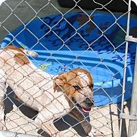 Adopt A Pet :: Emily - Groton, MA