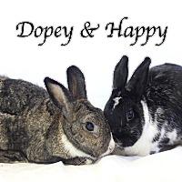 American Mix for adoption in Bradenton, Florida - Dopey
