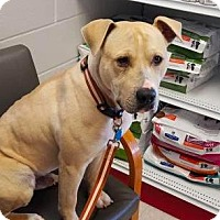 Adopt A Pet :: Hugo - Mission, KS