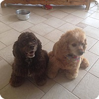 Adopt A Pet :: Sampson & Sierra Courtesy Post - Kannapolis, NC