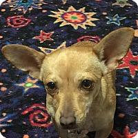 Adopt A Pet :: Bobbi - tampa, FL