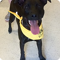 Adopt A Pet :: Rosco in CT - Manchester, CT