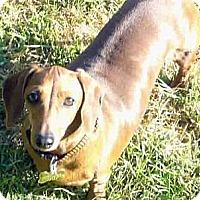 Adopt A Pet :: Dottie - San Jose, CA