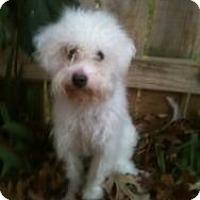 Adopt A Pet :: Alex - Justin, TX