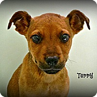 Adopt A Pet :: Terry - Vancleave, MS