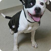 Adopt A Pet :: Macy - Gary, IN
