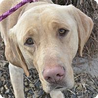 Adopt A Pet :: Rugar - Meridian, ID