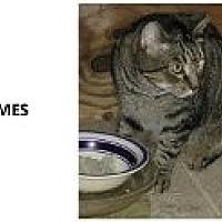 Adopt A Pet :: Holmes - Naples, FL