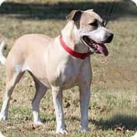 Adopt A Pet :: Butterscotch - Broken Arrow, OK