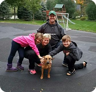 Labrador Retriever Mix Dog for adoption in Northville, Michigan - zLucy - ADOPTED