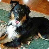 Adopt A Pet :: Oreo - New Oxford, PA
