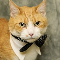 Adopt A Pet :: Jason - Enka, NC