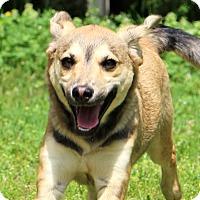 Adopt A Pet :: Trigger - Glastonbury, CT