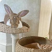 Adopt A Pet :: Dex - Los Angeles, CA