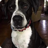 Adopt A Pet :: Perry - Leesburg, VA
