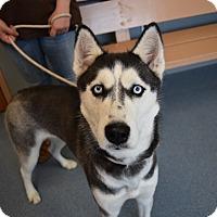 Adopt A Pet :: Constance - Bay Shore, NY