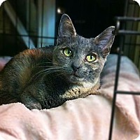 Adopt A Pet :: Molly - Long Beach, CA