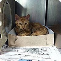 Adopt A Pet :: Timmy - Brooklyn, NY