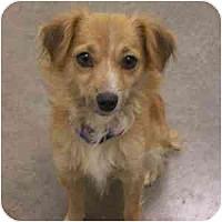 Adopt A Pet :: Meadow - Phoenix, AZ