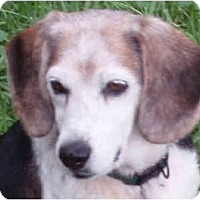 Adopt A Pet :: Annabelle (Annie) - Indianapolis, IN