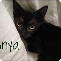 Adopt A Pet :: Anya-good luck kitty! - Hurst, TX