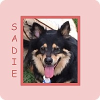 Adopt A Pet :: SADIE - Dallas, NC