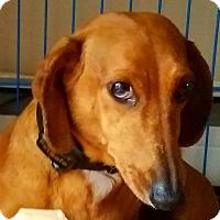 Adopt A Pet :: Buddy - Andalusia, PA