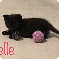 Adopt A Pet :: Belle (bottle fed) - Sterling Hgts, MI