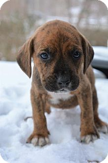 Terrier (Unknown Type, Small) Mix Puppy for adoption in Danbury, Connecticut - Mary