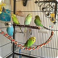 Adopt A Pet :: Sunny, Salty, Baby, Sunshine a - Glens Falls, NY